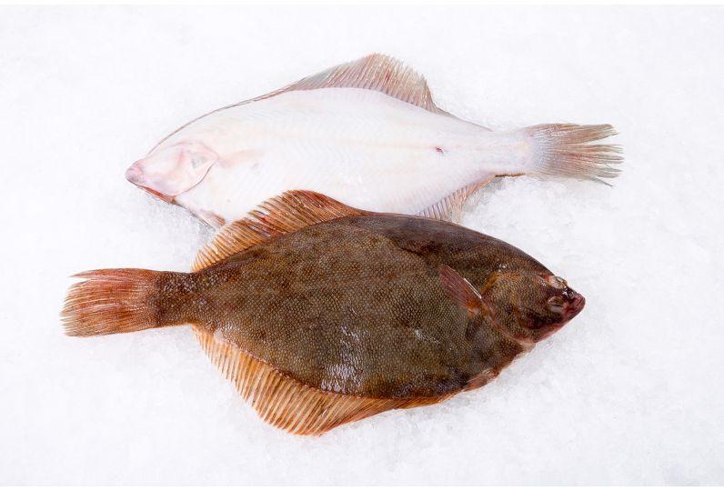 Flounder Fish Whole Citarella